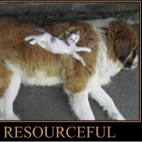 Resourceful's avatar - VF8aeq0