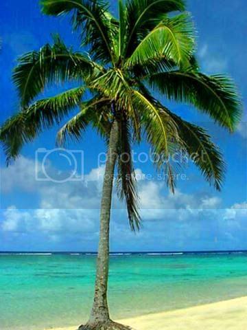 BuyLow's avatar - palm tree.jpg