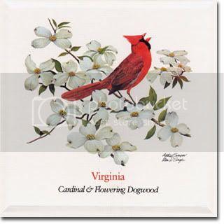 catmeds's avatar - Cardinal