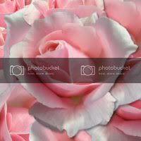 gwendolyn1's avatar - pinkrose2
