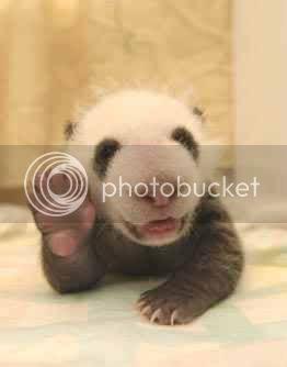 abreeze's avatar - panda hi.jpg