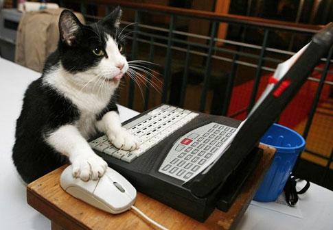 janem's avatar - cat computer.jpg