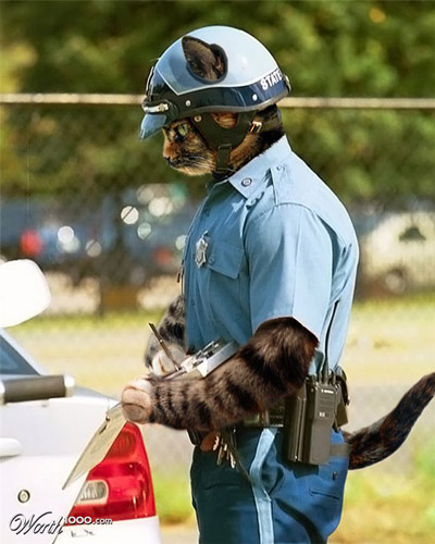 cat with a badge